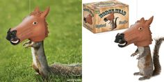 Horse head squirrel feeder - Lost At E Minor: For creative people