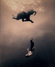 Gregory Colbert (photographer?) I do love elephants.