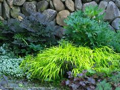shade plant combos for garden