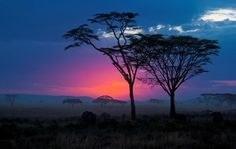 A Sultry Sunset In The Serengeti      Taken in Tanzania, the Serengeti not only provides a home to a staggering amount of mammal and avifauna species but also gives its denizens some pretty spectacular sunsets to witness.