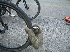 animal pics, funny animals, bicycles, sloths, funny animal pictures, funny pictures, funni, photo galleries, tire