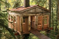 Love this tree house!