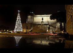 Piazza Venezia Christmas Tree, Rome, Italy