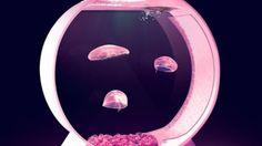The Desktop Jellyfish Tank
