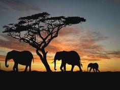 via African Safari Consultants