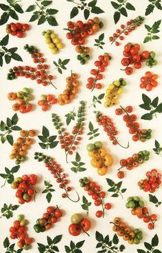 Repin Via: Brittany Watson Jepsen berri, food recipes, fruit, real life, design patterns, tomato plants, tomatoes, tomato design, food art