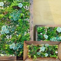 """DIY Living Walls of Succulents. Use an old picture frame for """"natural"""" wall art."""