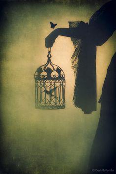 Surreal story starters, dark night, house lighting, weight, little birds, dream, hummingbird, birdcag, inspir