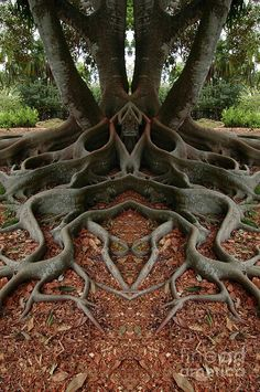 ✯ Rooted.  Is nature cool, or what?