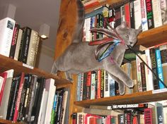 12 bookstore cats - this one reminds me of my Bonzai