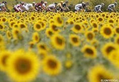 El Tour de Francia pasa por un campo de Girasoles (AP)