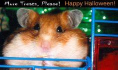 halloween express online coupon