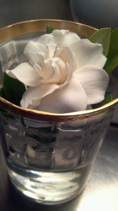 A single gardenia