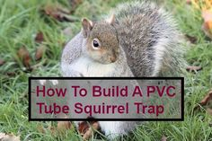 How To Build A PVC Tube Squirrel Trap