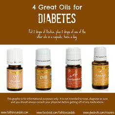 4 Great Young Living Oils for Diabetes - Ocotea, Dill, Coriander and Fennel. For more information, or to place an order, visit www.BibleOilsForHealth.com.