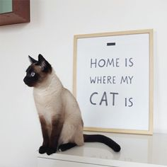 Poster from Audreyjeanneshop - for cat lovers! 30% off, 12.60 EUR