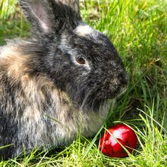 RT @Bunny Buddhism: There is no shame in resting, when a bunny is too tired to hop.