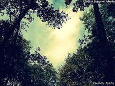 houses, mothers, god, natur heart, heart shape, trees, meditation, mother nature, heart tree