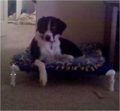 Rip Stop Nylon Dog Bed