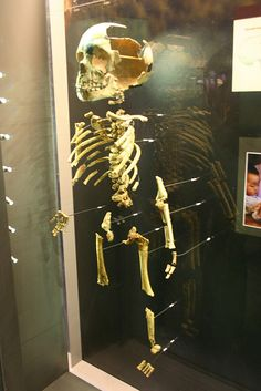 A Young Neanderthal by Ryan Somma, via Flickr