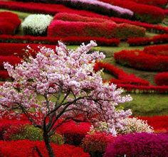 Amazing colors....