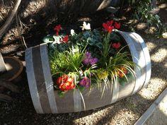 Flowers in a wine barrel