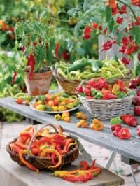 how to grow the best sweet and hot peppers