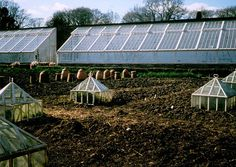 Cloches, vinehouses and greenhouses