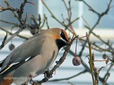 How to attract birds to your garden in the winter