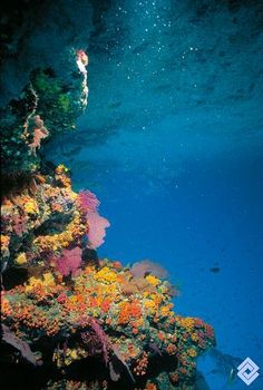 Vista de La Cazuela, al sur de la isla de Gorgona, Colombia.  Fotógrafo: Diego Torres Rivera