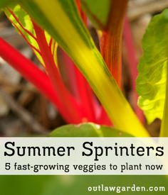 Five fast-growing veggies