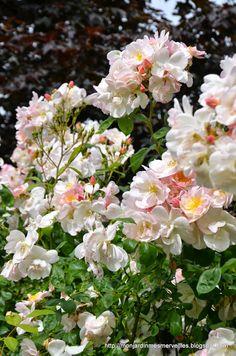 'Sourire d'Orchidée' | Mon Jardin Mes Merveilles: Un Sourire comme un tournesol