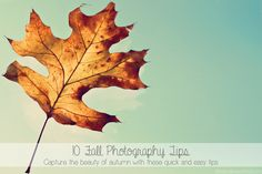 Fall Photography Tips,