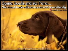 "Dog Quote: ""Love Teachers""  by: Jennifer Kruse, LMT CRMT  JenniferKruse.com"