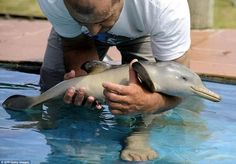 I never knew baby dolphins were this small!