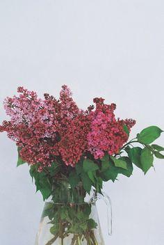 Lilac. Love.