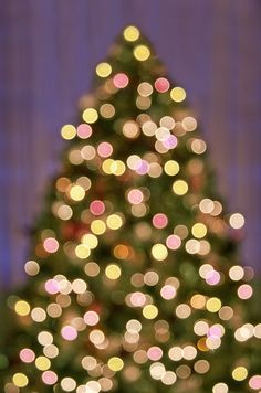 Christmas Tree Sparkle • love this •