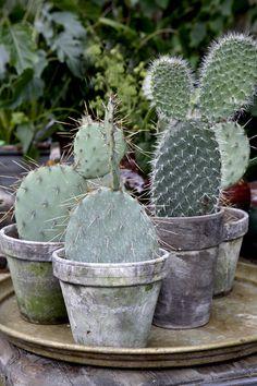 Clemmensen and Brok - Cactus