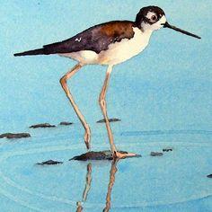 black neck stilt, shore bird watercolour