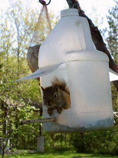 too cute_juice/milk jug squirrel feeder