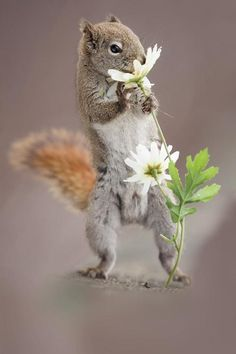 Squirrel and flower by Andre Villeneuve