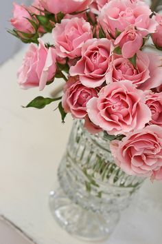 pink roses by suzann
