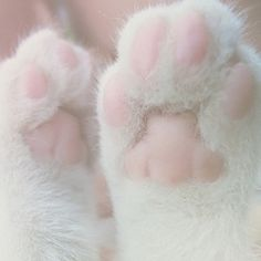 Yes, I'm pinning cute kitten paws. I've also started listening to country music. I have no idea who I am anymore. -Courtney Life Stuff, Cat Paws, Kittens Paw, Pink Pretty, Adorable Kittens, Kittens Pastel, Pink Paw, Jelly Beans, White Cat
