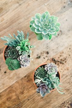 Style your home with succulent arrangements for a cool look.