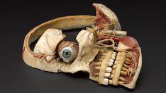 Wax anatomical model of female human head http://steampunkincornwall.blogspot.co.uk/