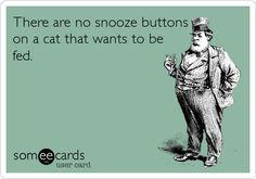 crazy cats, laugh, ecard, stuff, pet, giggl, funni, humor, crazy cat lady