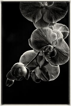 """From my upcoming book """"Moments in the Monochrome Garden""""   ©2012 alan shapiro"""
