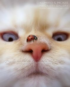 Apparently the ladybug stunned kitty so much that she forgot to run from the camera. -DdO:) - http://www.pinterest.com/DianaDeeOsborne/big-cats-little-cats/