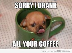 """Puppy that drank all your coffee - Funny puppy in a cup licking it's mouth: """"Sorry I drank all your coffee."""""""