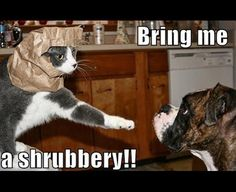 funny meme with a cat wearing a paper bag over his head quoting a line from Monty Python and the Holy Grail